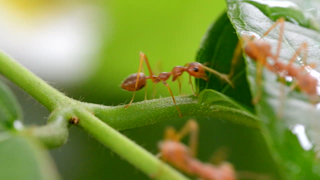 ants working in nature - ecosystem stock videos & royalty-free footage