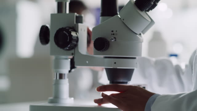vídeos de stock e filmes b-roll de anything is possible under the microscope - microbiologia