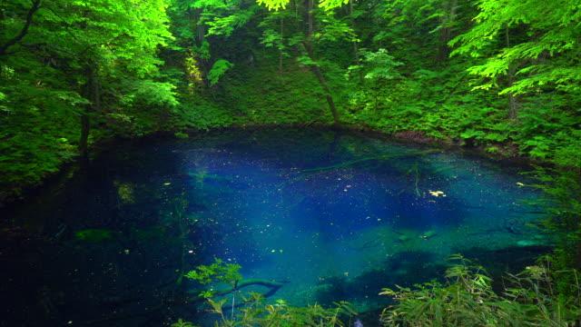 vídeos de stock, filmes e b-roll de lagoa de aoike em shirakami sanchi, aomori, japão - shirakami sanchi