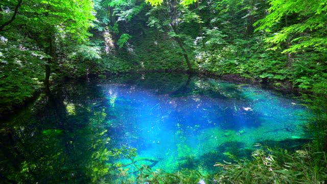 aoike pond in shirakami sanchi, aomori, japan - aomori prefecture stock videos & royalty-free footage