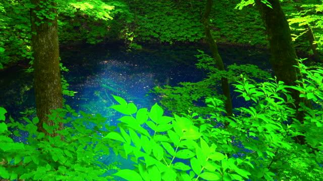 Aoike pond in Shirakami Sanchi, Aomori, Japan