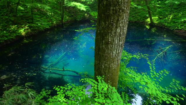 青森県白神山地の青池池 - 湖点の映像素材/bロール