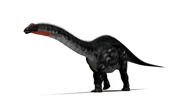 apatosaurus dinosaur walking - 恐竜点の映像素材/bロール