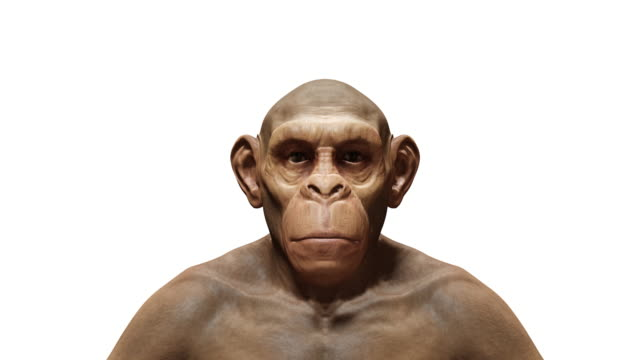 4k ape to man process morphing animation.isolated with luma matte - evolution stock videos & royalty-free footage