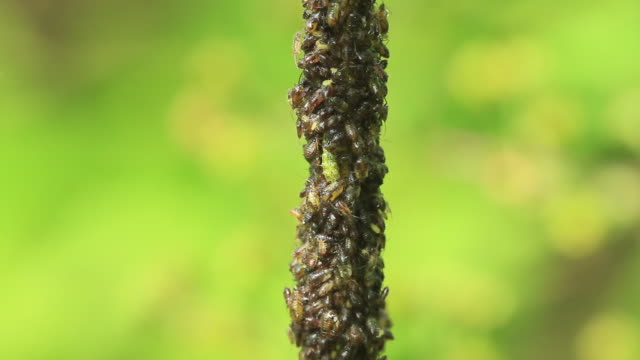 aphid - tights stock videos & royalty-free footage