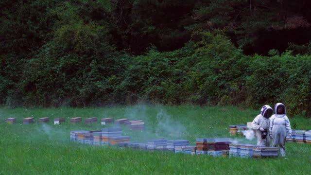 Apiculture activity in Pirineos