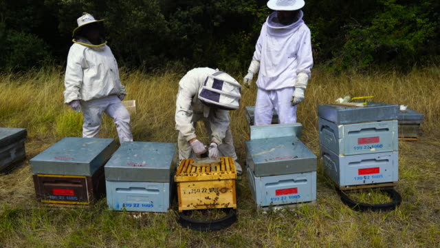 vídeos de stock, filmes e b-roll de apiculture activity in pirineos - rosto coberto
