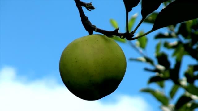 Apple – Blue Sky