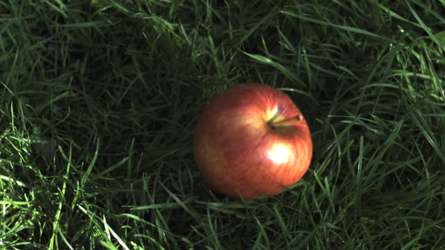 stockvideo's en b-roll-footage met slo mo apple falling, hits ground, high angle close up, stalk upper right - zwaartekrachtsveld