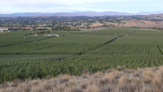 apple farm wide pan l - wiese stock videos & royalty-free footage