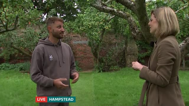 apple harvest begins at fenton house and garden; england: london: hampstead: fenton house and garden: ext reporter to camera live, in apple orchard... - orchard stock videos & royalty-free footage