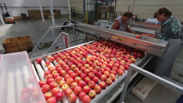 vídeos de stock e filmes b-roll de apple harvesting and fruit packing plant on a farm operated by yuzhnye zemli ooo part of afg national group in merchanskoye village krasnodar krai... - veículo terrestre comercial
