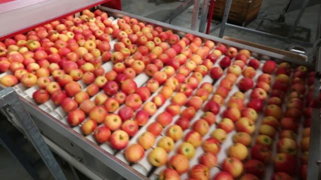 apple harvesting and fruit packing plant on a farm operated by yuzhnye zemli ooo part of afg national group in merchanskoye village krasnodar krai... - frutteto video stock e b–roll