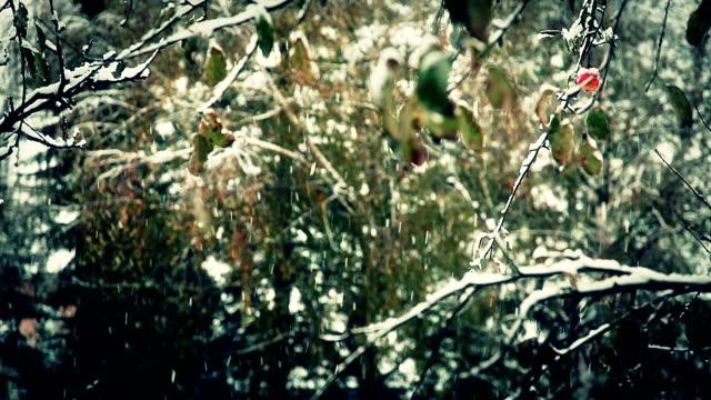 hd :アップルの雪 - レッドデリシャス点の映像素材/bロール