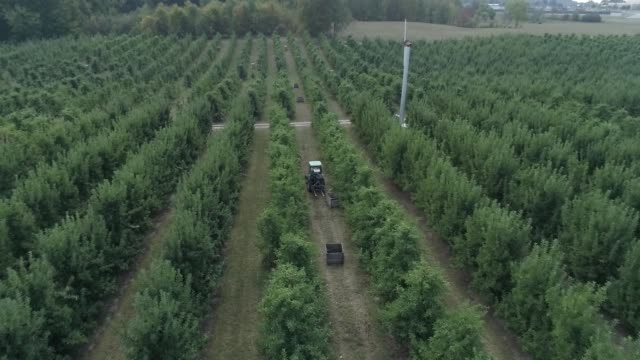 apple orchard aerial track through trees - lavoratore emigrante video stock e b–roll