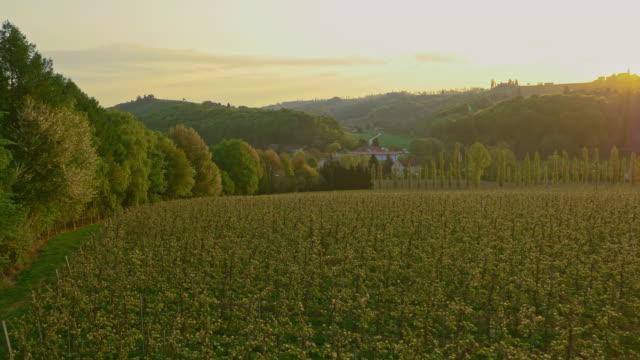 AERIAL Apple orchard at sunrise