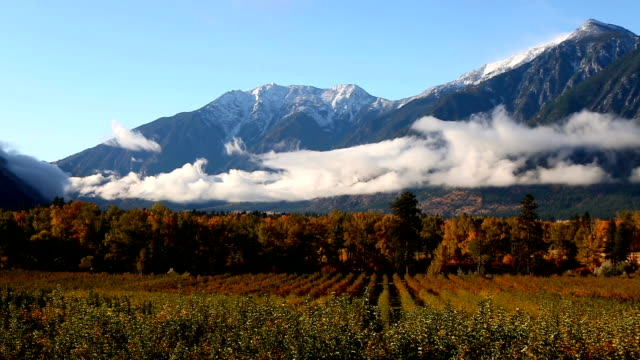 Apple Orchard Cawston British Columbia