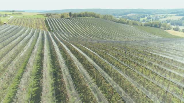 aerial apple orchard - orchard stock videos and b-roll footage
