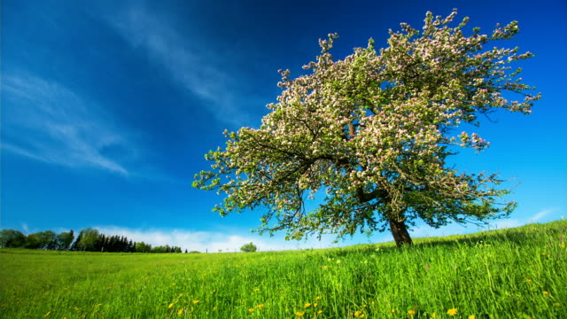 crane up: apple tree in spring - crane shot stock videos & royalty-free footage