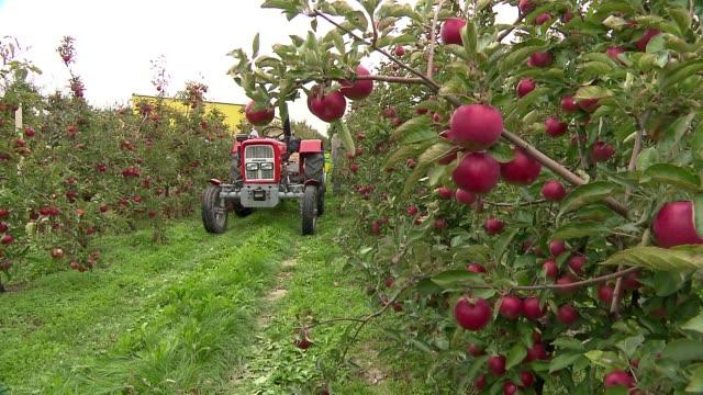 apple tree orchard - apfel stock-videos und b-roll-filmmaterial