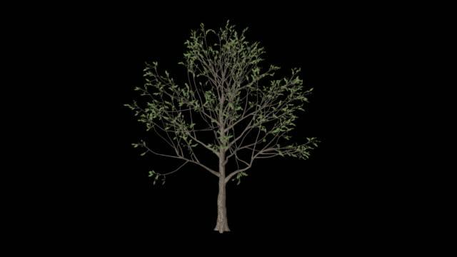apple tree - apple tree stock videos & royalty-free footage