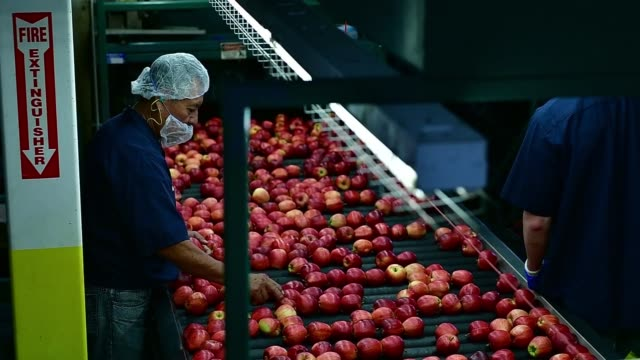 Apples are checked for quality by workers at the Algoma Orchards processing facility in Clarington Ontario Canada on October 6 2017 Photographer...