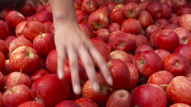 apples being checked for quality at organic orchard - organic farm stock videos & royalty-free footage