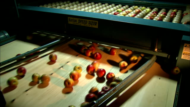 apples fall from a sizing device onto a conveyor. - toffee stock videos & royalty-free footage