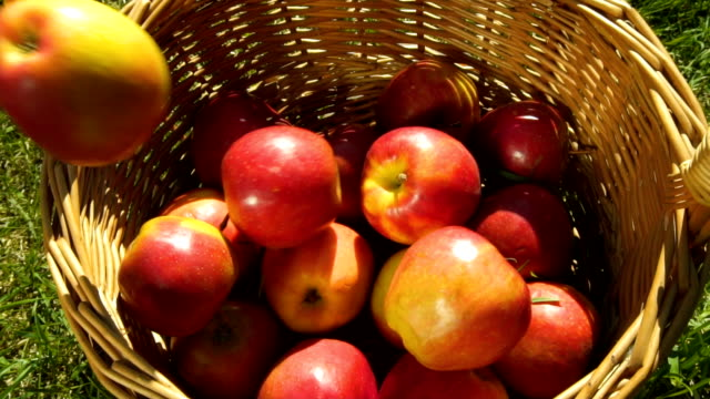 Apples falling into the basket