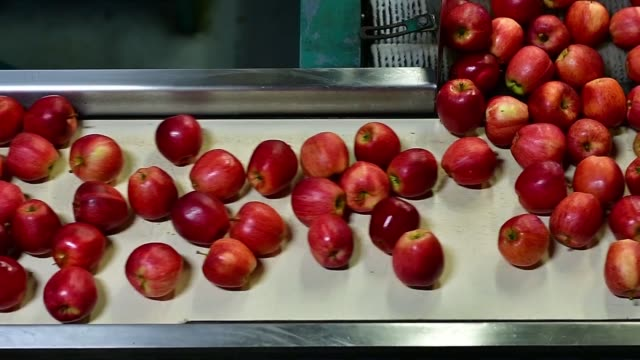 Apples move by on conveyor belt at the Algoma Orchards processing facility in Clarington Ontario Canada on October 6 2017 Photographer James...