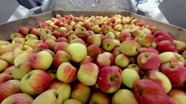 apples on a factory production line - packaging stock videos & royalty-free footage