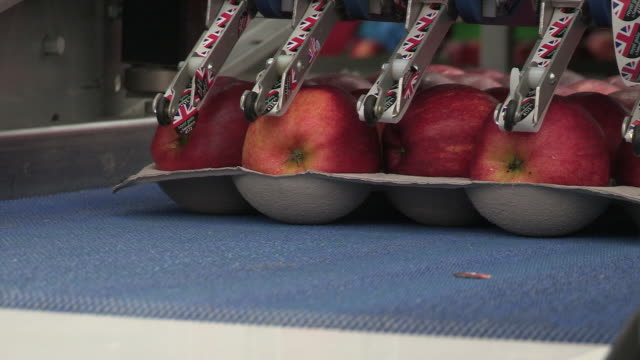 apples on a production line are labelled by a machine, kent, uk. - robotic arm stock videos & royalty-free footage