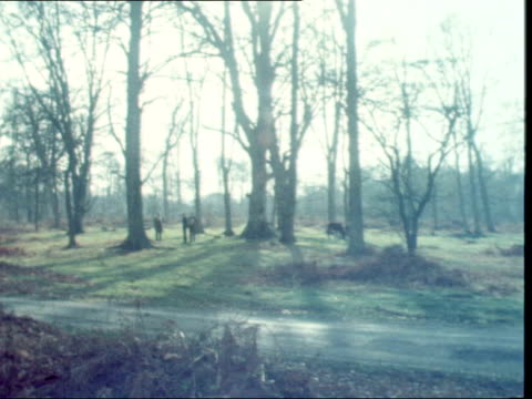 bp apply to carry out survey for oil under the new forest england new forest shot forward from car along road in new forest side tracking shot from... - new forest stock videos and b-roll footage