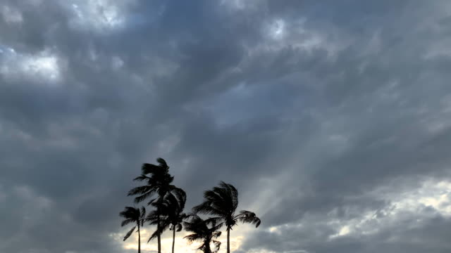 approaching storm clouds and palm trees - moody sky stock videos & royalty-free footage