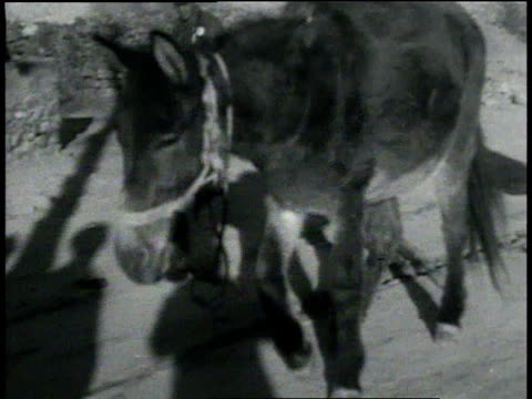 stockvideo's en b-roll-footage met april 6, 1933 montage chinese soldiers retreating, some carrying wounded on stretchers / china - 1933