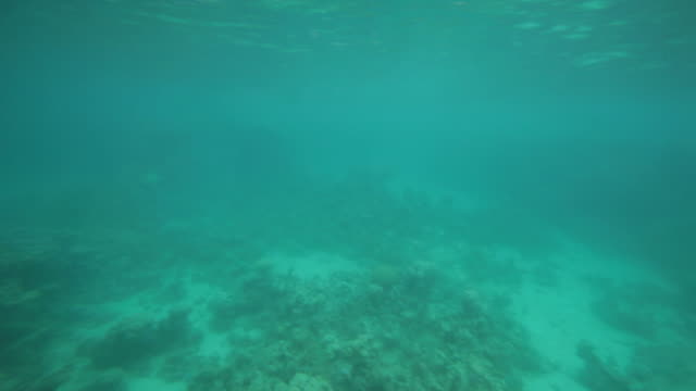 aqaba coral reef seen from a small tourist submarine - gulf of aqaba stock videos & royalty-free footage
