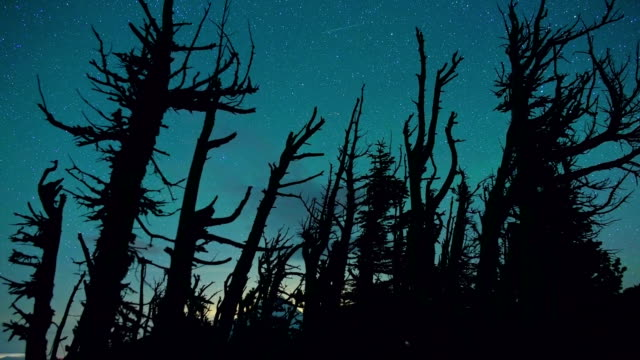 Aqua night starry sky dead trees snags after forest fire Mt. Hood