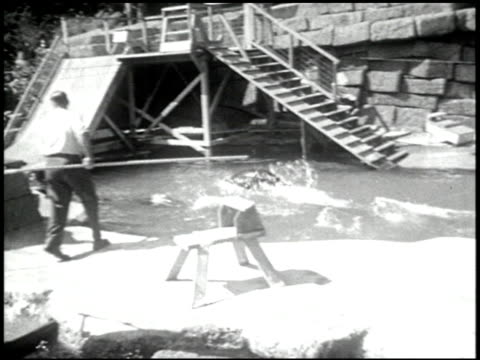 aqua-frolics - 1 of 7 - see other clips from this shoot 2317 stock videos and b-roll footage