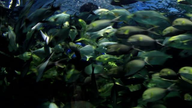 Aquanaut feeding fish in aquarium.