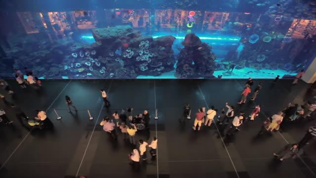 ws ha aquarium at dubai mall / dubai, united arab emirates - pedestrian walkway stock videos & royalty-free footage