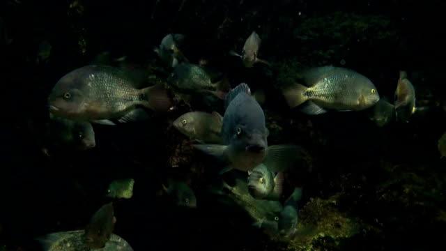 HD: Aquarium Fish