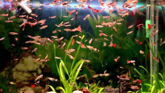 aquarium full of colorfull fish - freshwater fish stock videos & royalty-free footage