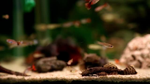 Aquarium full of colorfull fish