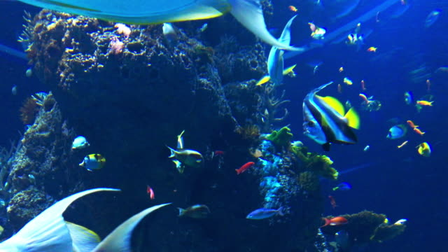 aquarium full of fish - large group of animals stock videos & royalty-free footage