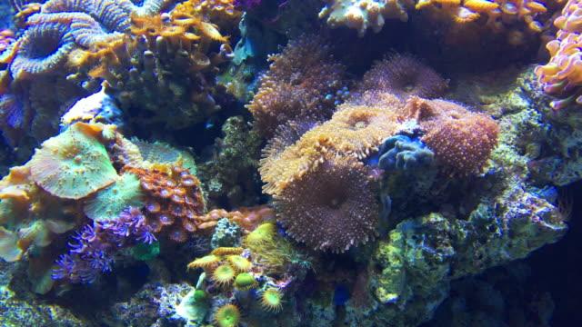 水族館の魚 - いっぱいになる点の映像素材/bロール
