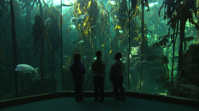 vidéos et rushes de aquarium kelp tank, three kids looking, south africa  - aquarium établissement pour animaux en captivité