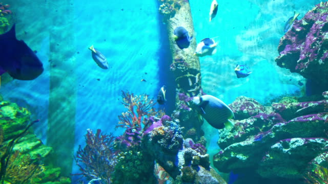 aquarium public with fishes and corals tropical colorful fishes