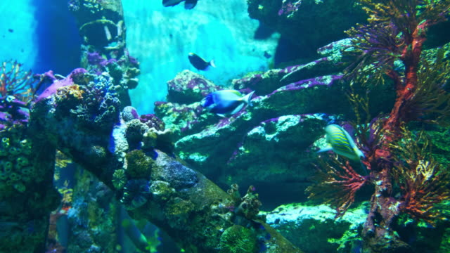 aquarium public with fishes and corals tropical colorful fishes - aquarium stock videos and b-roll footage