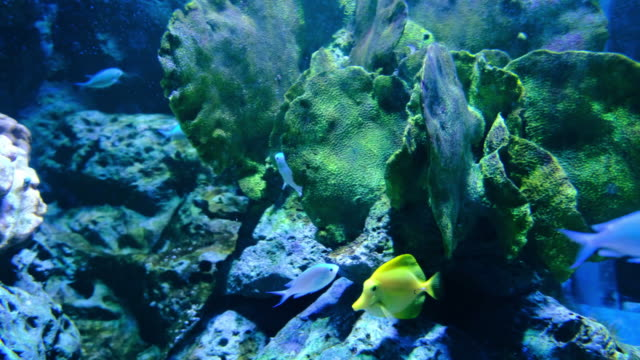 aquarium public with fishes and corals - saltwater fish stock videos & royalty-free footage