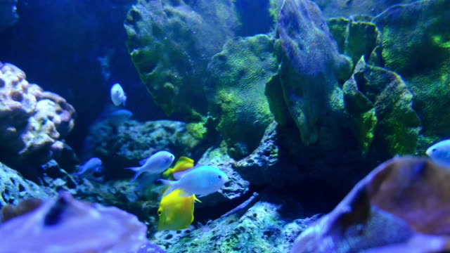 aquarium public with fishes and corals - salt water fish stock videos & royalty-free footage